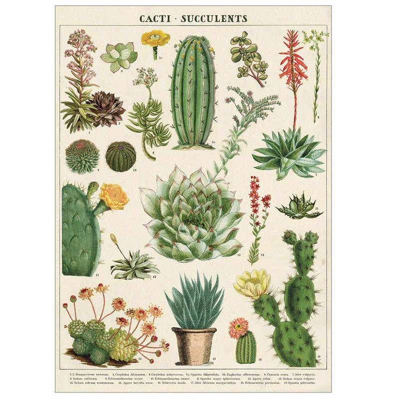 Cacti and succulents poster by Cavallini papers