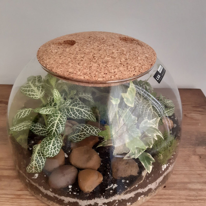 LSA International recycled glass terrarium planted up by Small and Green