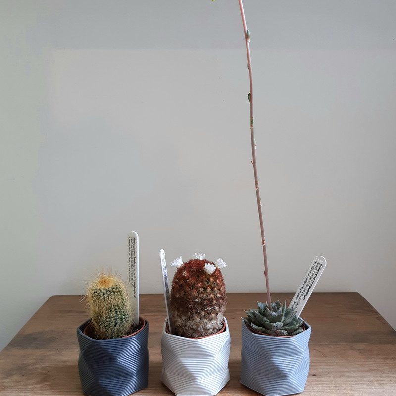 Studio Nilli small pot in grey colours with plant